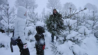 hugga egen julgran i Skåne