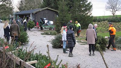 Julgranar från Norregårdens julgransodling