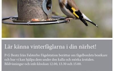 Mer om vinterns fåglar