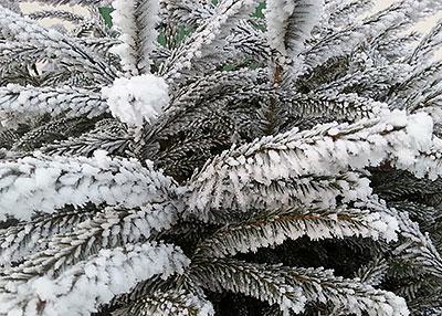 Julgranar – de vanligaste frågorna