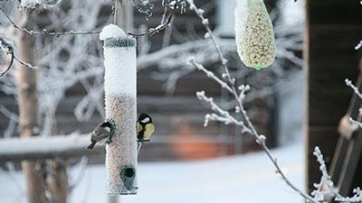 Mata fåglarna!